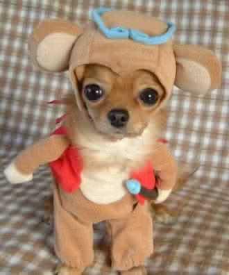 monekydog