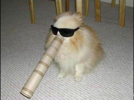 tubedog